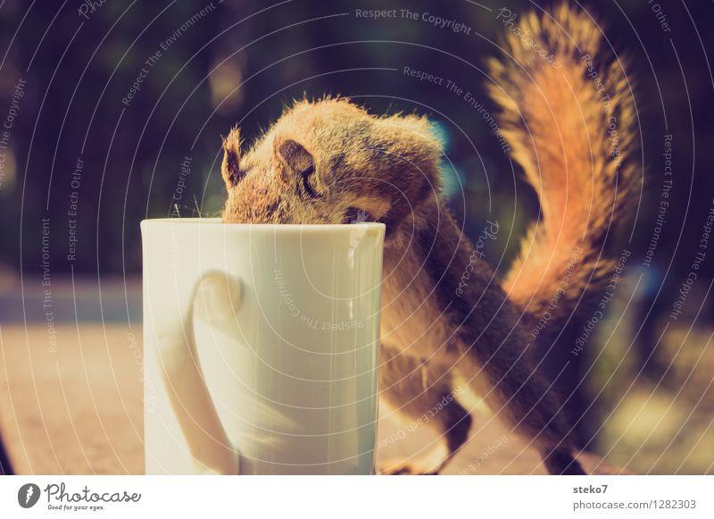 Neugier III Eichhörnchen 1 Tier Tasse frech Suche Dieb Camping Tierporträt