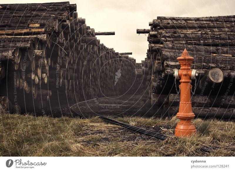 Sackgasse Baumstamm auftürmen Hydrant rot gießen Wiese gefallen Güterverkehr & Logistik außergewöhnlich mehrere beeindruckend Stapel Barriere Wege & Pfade