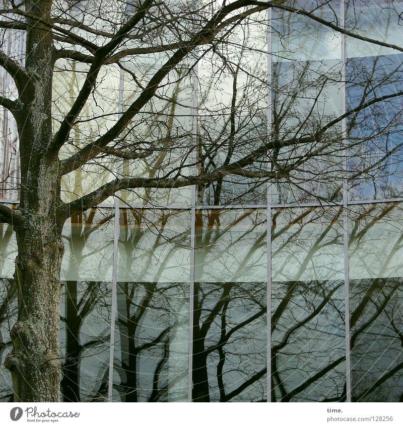 Spiegelspiele Baum Haus Fenster Architektur Glas modern Macht Kommunizieren Sträucher Ast vorwärts Reflexion & Spiegelung rückwärts Demonstration Originalität