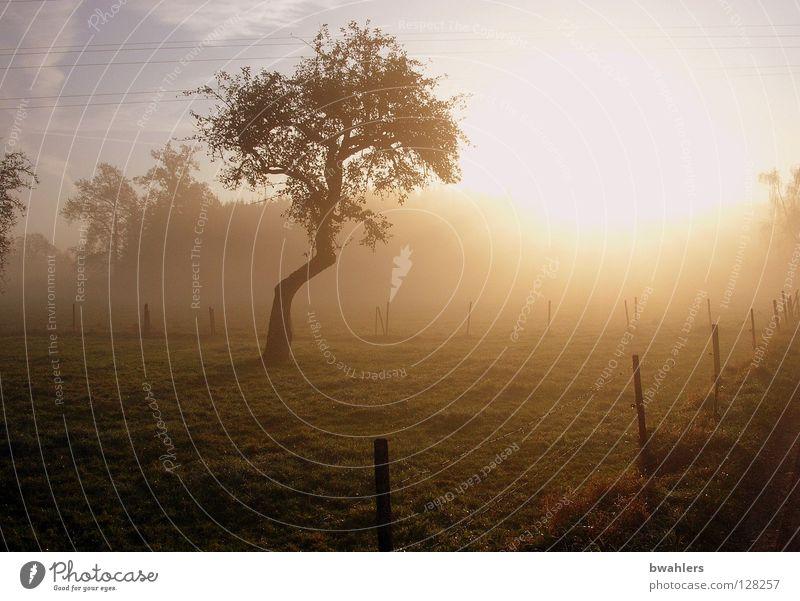 Morgenstimmung 1 Nebel Baum Zaun Wiese Wald Licht Stimmung Herbst Gegenlicht Sonne Beleuchtung Himmel Landschaft