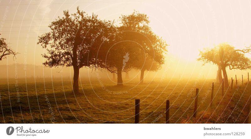 Morgenstimmung 2 Nebel Wiese Baum Zaun Gegenlicht Stimmung Licht Herbst Sonne Landschaft Beleuchtung Himmel Schatten