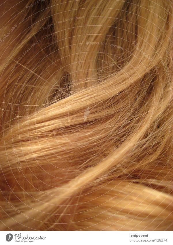 #FFCC66 blond Locken weich lang Wellen Weizen Gesundheit Physik braun feminin glänzend Haarwaschmittel Stil stylen durcheinander Haare & Frisuren Sommer schön