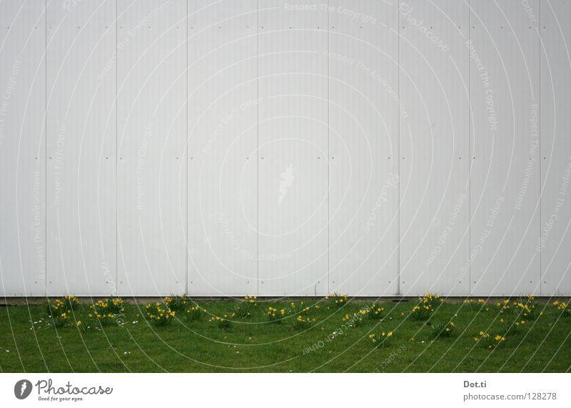 hier könnte Ihr Ostergruß stehen! weiß Blume grün Pflanze Wiese Wand Gras Frühling Park Gebäude Linie Fassade leer Platz trist Rasen