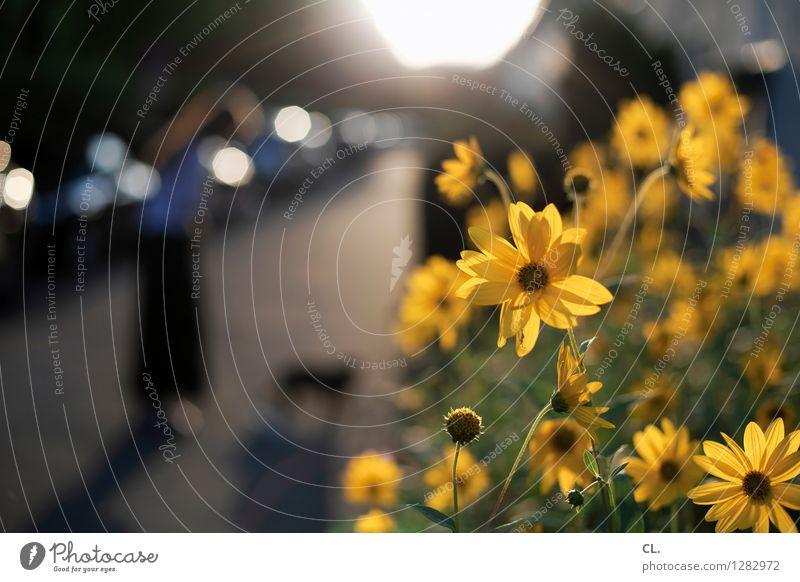 ich komm ja schon Mensch Frau Hund Natur Pflanze Sommer Sonne Blume Tier Erwachsene Umwelt gelb Straße Wege & Pfade feminin Freizeit & Hobby