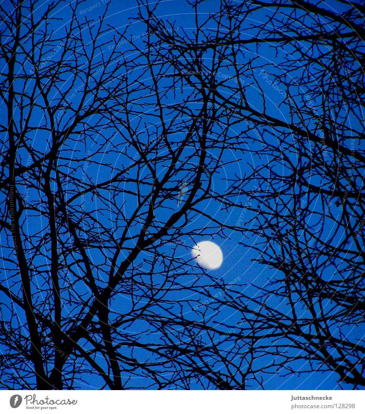 Verfangen Baum schwarz Nacht Himmelskörper & Weltall Nachthimmel rückwärts Romantik schön Mond blau Ast geheimnisvoll verfangen Juttaschnecke Erde oben