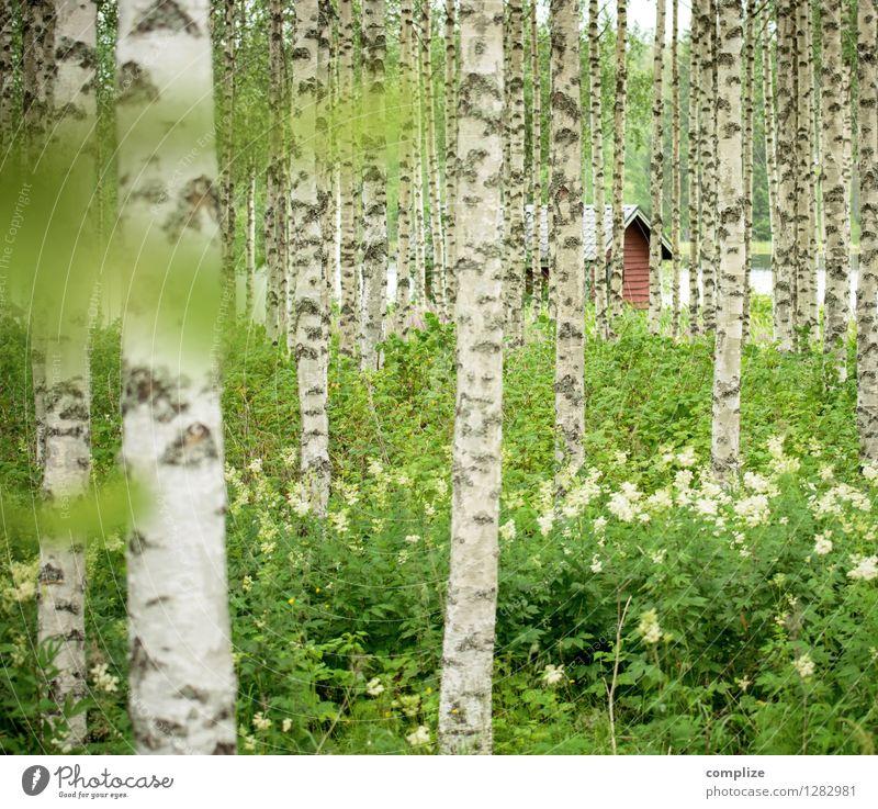 Versteckt im Birkenwald Erholung ruhig Spa Ferien & Urlaub & Reisen Tourismus Freiheit Sommer Sommerurlaub Strand Häusliches Leben Klima Pflanze Baum