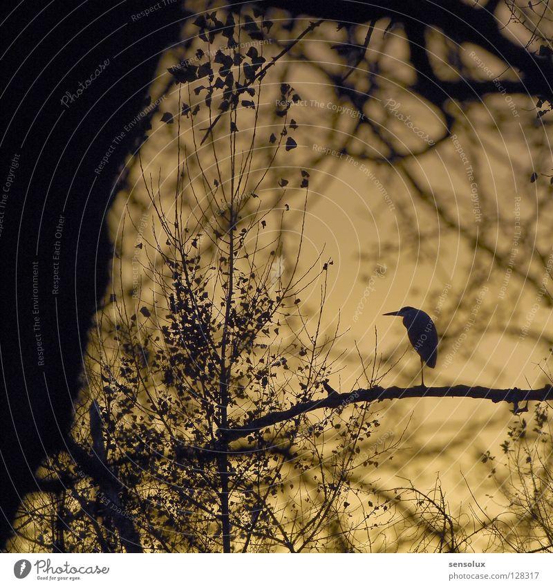 Gut versteckt und doch entdeckt Natur Himmel Wald Vogel Ast verstecken Abenddämmerung Umweltschutz Kranich Unterholz Abendsonne Reiher
