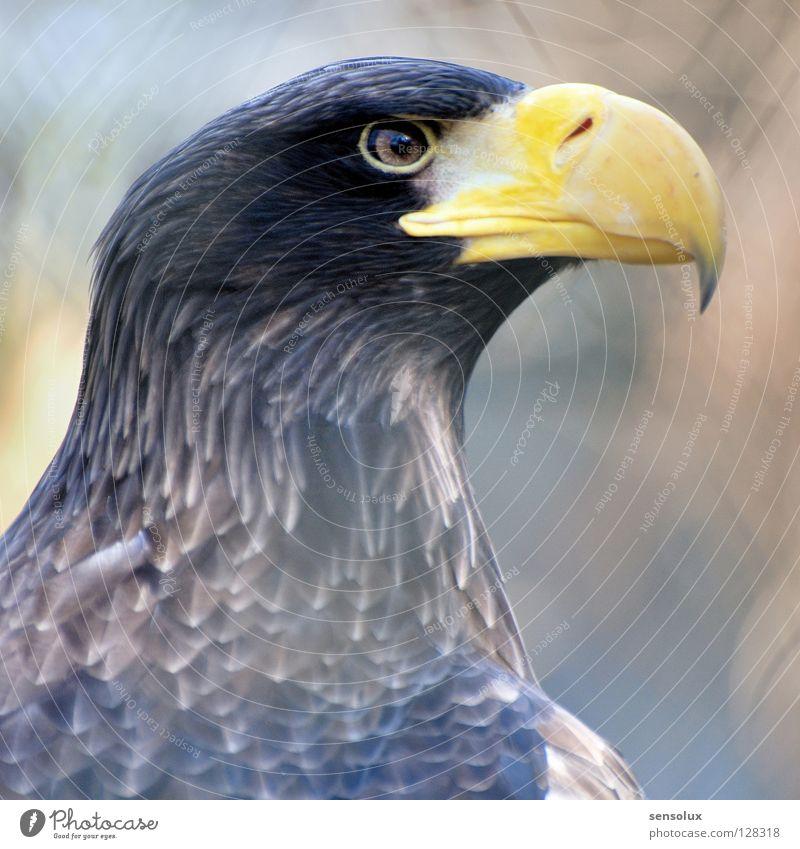 Adlerauge sei wachsam Natur schön Auge Vogel beobachten Wachsamkeit Schnabel Stolz Vorsicht Tier Adler Greifvogel