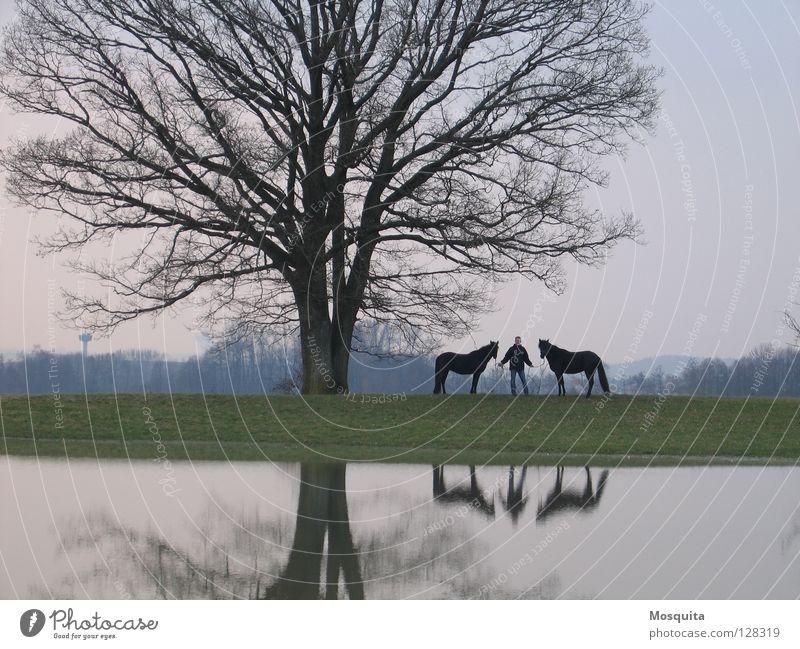 Seepferdchen Mensch Mann Natur Wasser Baum schwarz Erwachsene Herbst Wiese Landschaft Frühling nass stehen Pferd Spaziergang