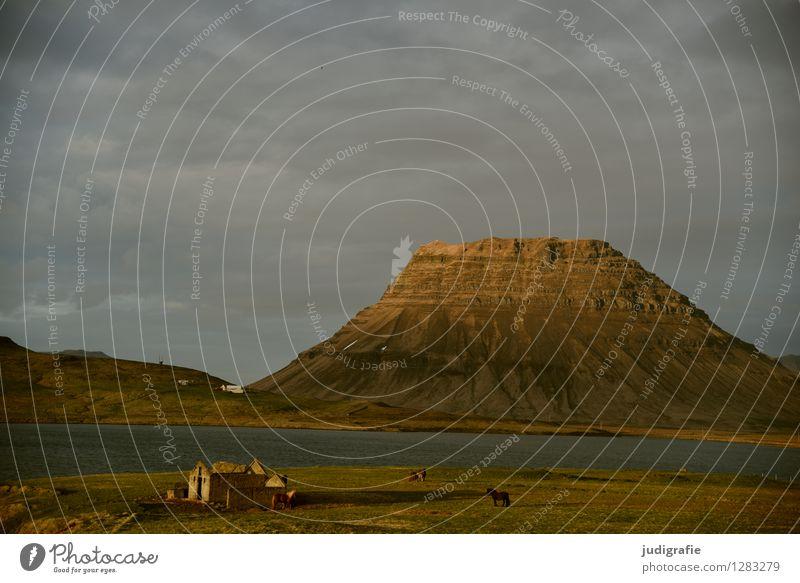 Island Umwelt Natur Landschaft Himmel Wolken Sonnenlicht Klima Hügel Felsen Berge u. Gebirge Fjord Haus Hütte Ruine Tier Pferd natürlich wild Stimmung Idylle