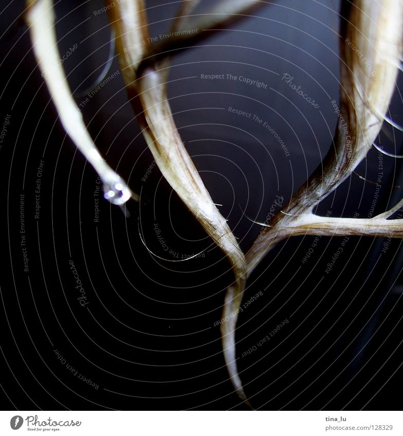 dripping wet... Bad nass Haarsträhne Strukturen & Formen Haare & Frisuren Wäsche Sauberkeit schön Wellen trocknen dunkel weich kalt Wasser triefnass