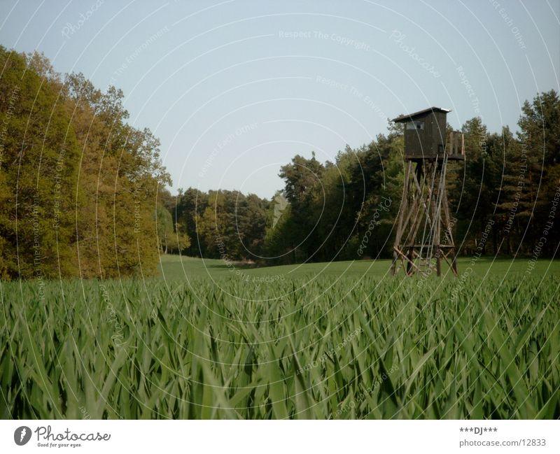 Jägerhaus Gras Baum Tier Suche schießen Jagd Wildtier Natur beobachten Jägersitz