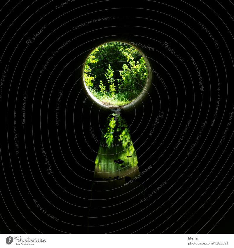 Schlüsselmeister sucht Torwächter Umwelt Natur Pflanze Tunnel Schloss dunkel rund grün schwarz Gefühle Hoffnung Glaube entdecken Erwartung geheimnisvoll Neugier