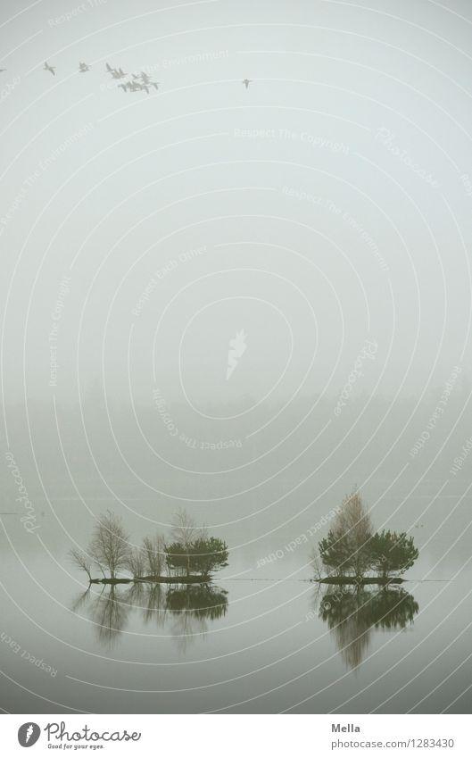 Undurchsichtig Umwelt Natur Luft Wasser Himmel Herbst Nebel Pflanze Baum Moor Sumpf Teich See Vogel Tiergruppe Schwarm fliegen hoch natürlich oben trist grau