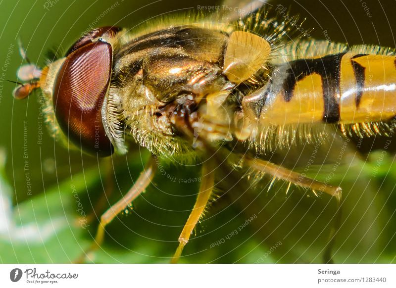 Die Schönheit liegt im Detail Natur Pflanze Blume Landschaft Tier Wald Umwelt Wiese Gras Garten fliegen Park Feld Fliege Sträucher Flügel