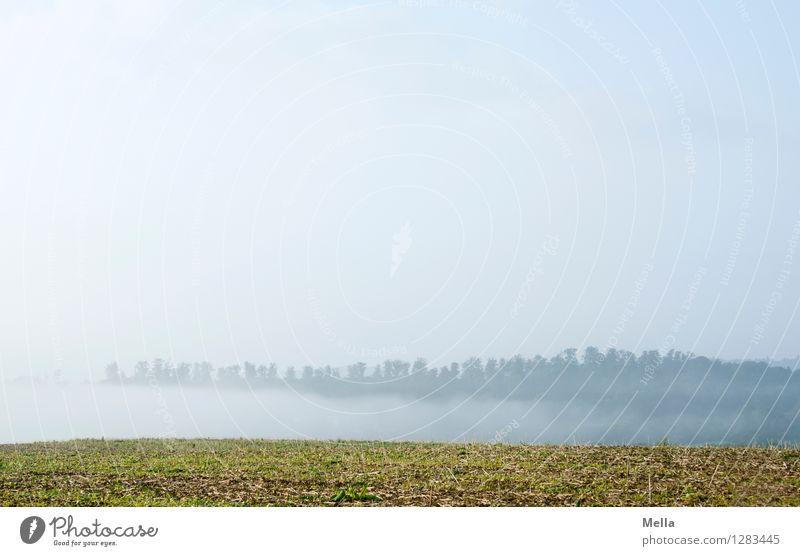 Schwaden Umwelt Natur Landschaft Luft Himmel Wetter Nebel Wiese Feld Wald Hügel natürlich blau Stimmung Erholung ruhig Ferne ziehen Nebelbank einfach leer