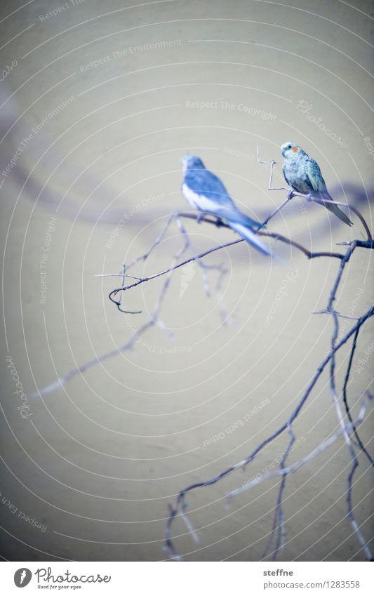 Tierisch gut: Katzenfutter Baum Vogel sitzen Haustier singen Sittich
