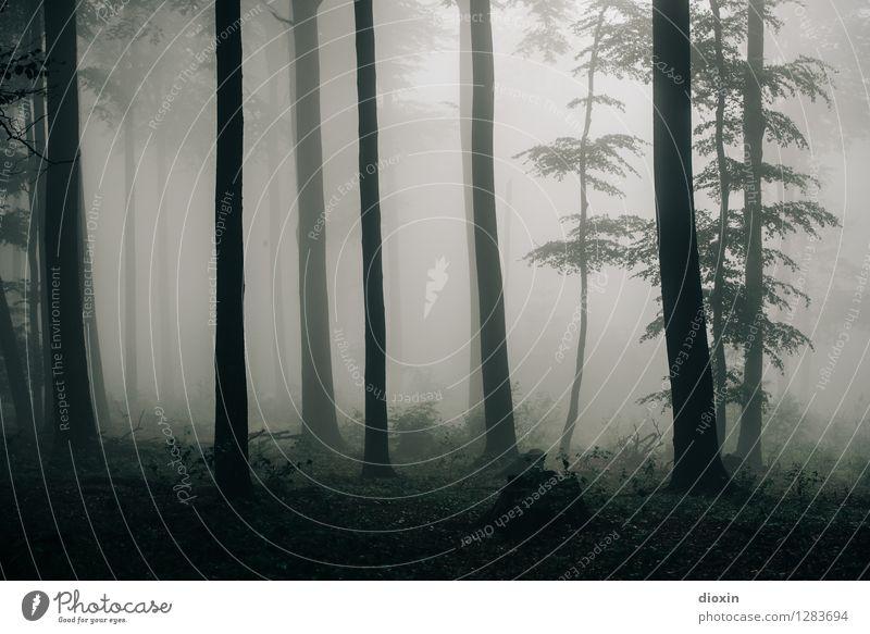 Nachdemregenwald [14] Ausflug wandern Umwelt Natur Landschaft Pflanze Herbst Klima Wetter schlechtes Wetter Nebel Regen Baum Wald Urwald Pfälzerwald Wachstum