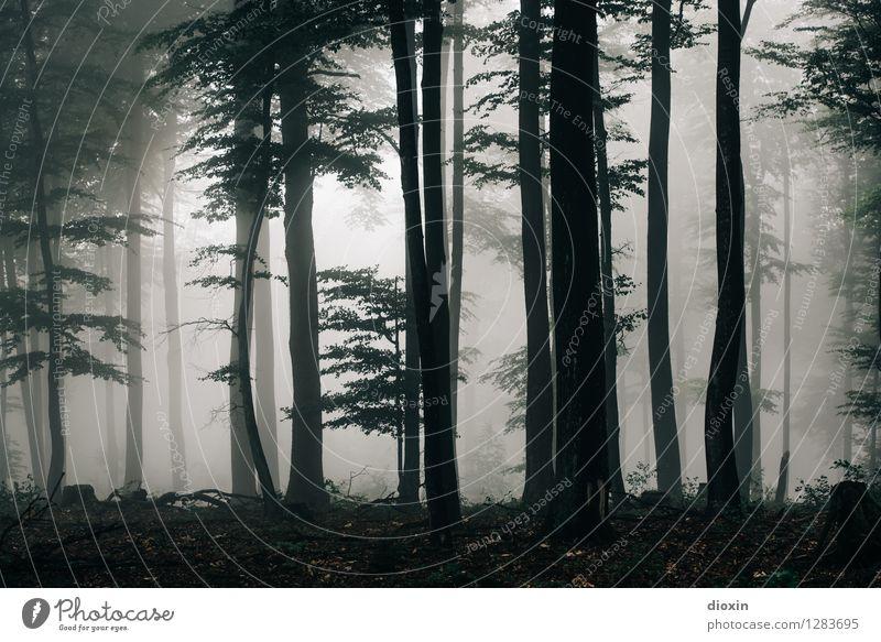 Nachdemregenwald [13] Natur Pflanze Baum Landschaft Wald kalt Umwelt Herbst Regen Wetter Nebel Wachstum wandern Ausflug Klima nass