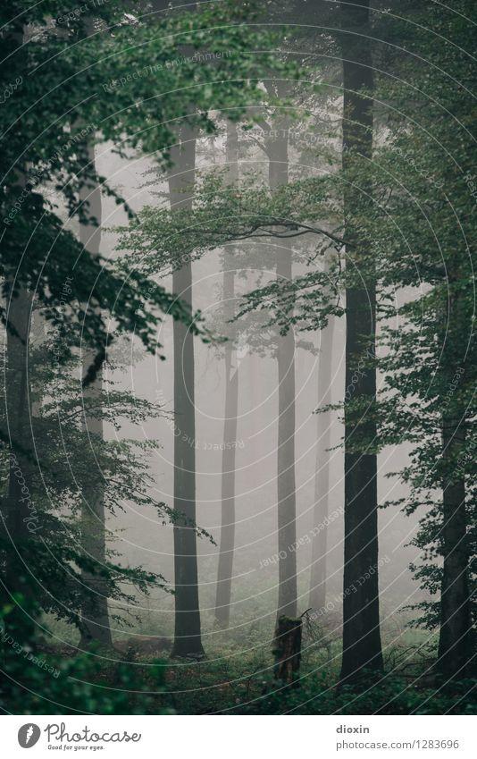 Nachdemregenwald [15] Ausflug wandern Umwelt Natur Landschaft Pflanze Herbst Klima Wetter schlechtes Wetter Nebel Regen Baum Wald Urwald Pfälzerwald Wachstum