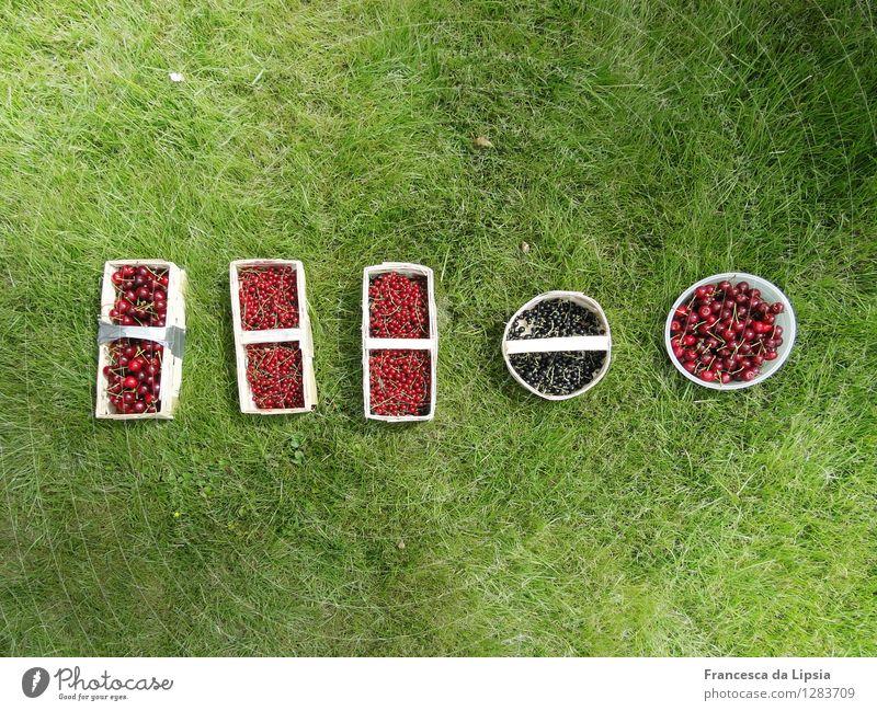 Satte Ernte Natur Ferien & Urlaub & Reisen grün Farbe Sommer rot Gesunde Ernährung Wiese Gras Gesundheit klein Garten Frucht frisch genießen süß