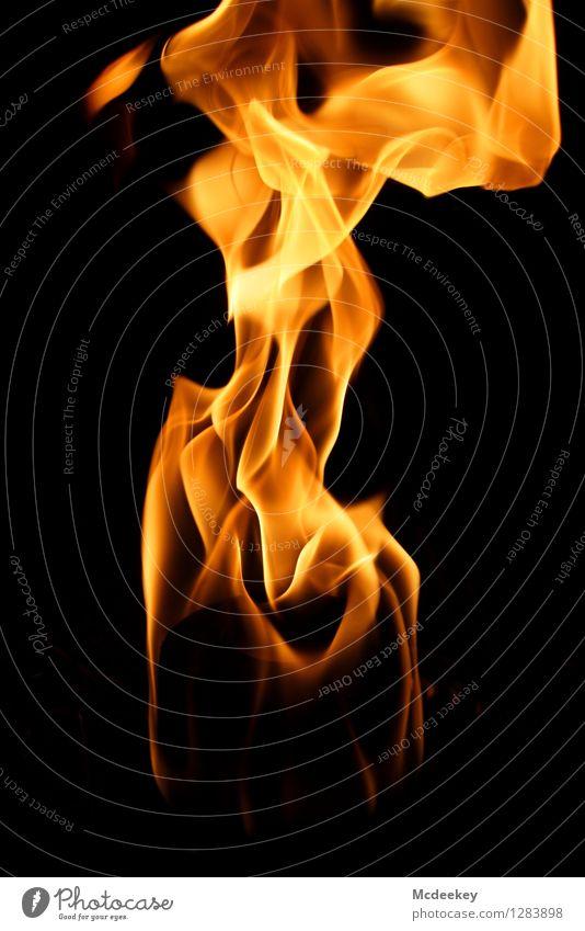 Der weibliche Körper feminin Junge Frau Jugendliche Rücken Brust Bauch Gesäß 1 Mensch Rätsel Feuer Feuerstelle Toilettenpapier Ordnung Bewegung glänzend