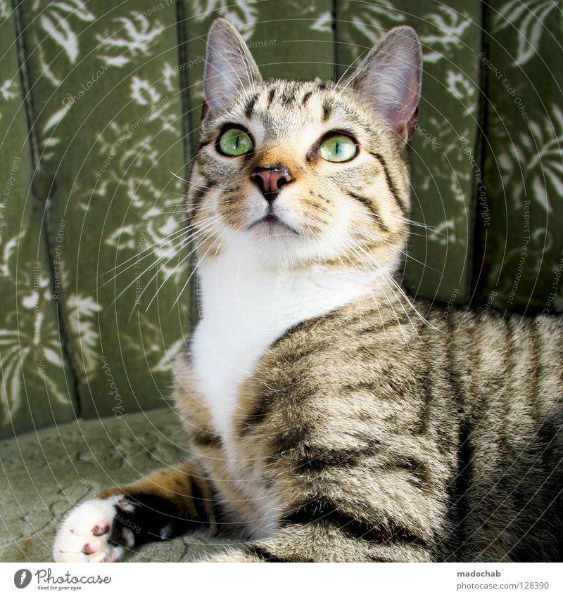 SO TUN ALS HÄTT MAN NOCH EIER ;) grün Tier Auge Katze Kraft groß Kraft süß Macht Fell Gewalt Statue deutlich Haustier Pfote Säugetier