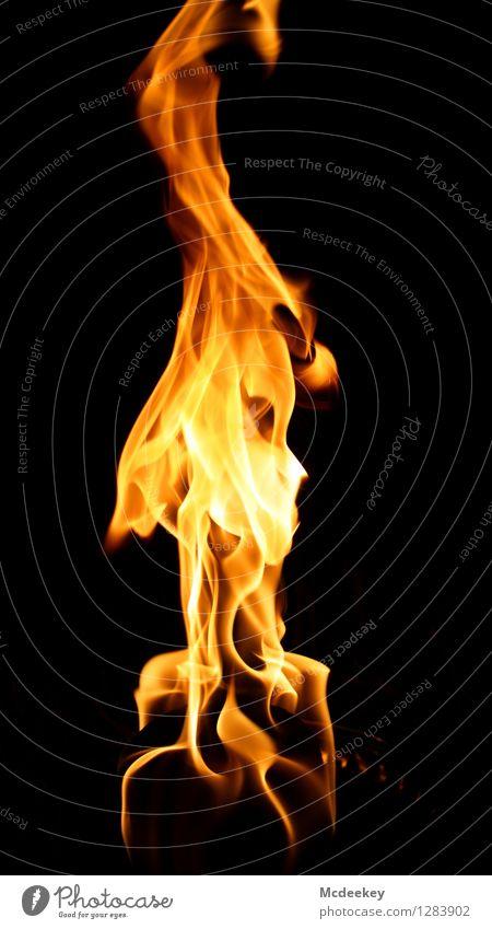 Die Hexe feminin Frau Erwachsene Kopf Auge Nase Mund 1 Mensch 60 und älter Senior Hexenfeuer Feuer Feuerstelle Toilettenpapier Zufall Fantasygeschichte züngeln