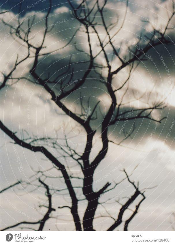 cloud/\tree Baum Wolken dunkel Frühling weiß grau rund Sonntag Himmel blau geflockt verzweigt hochgewachsen Einsamkeit Berge u. Gebirge