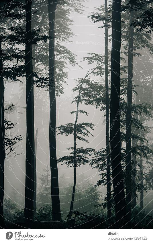 Nachdemregenwald [8] Ausflug wandern Umwelt Natur Pflanze Herbst Klima Nebel Regen Baum Wald Urwald Pfälzerwald Wachstum nass natürlich feucht feuchtkalt
