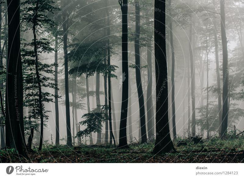 Nachdemregenwald [11] Ausflug wandern Umwelt Natur Landschaft Pflanze Herbst Klima Wetter Nebel Regen Baum Wald Urwald Pfälzerwald Wachstum nass natürlich ruhig