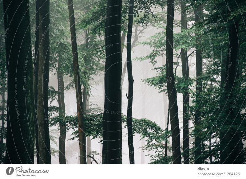 Nachdemregenwald [5] Ausflug wandern Umwelt Natur Pflanze Nebel Baum Wald Urwald Pfälzerwald Wachstum frisch natürlich feucht Farbfoto Außenaufnahme