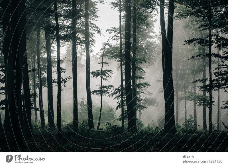 Nachdemregenwald [12] Ausflug wandern Umwelt Natur Landschaft Pflanze Herbst Klima Wetter Nebel Regen Baum Wald Urwald Pfälzerwald Wachstum nass natürlich ruhig