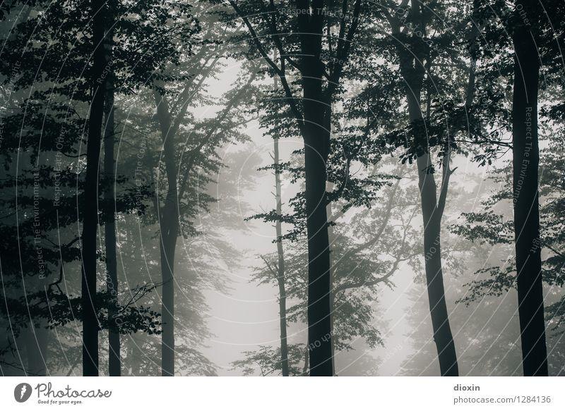 Nachdemregenwald [7] Ausflug Umwelt Natur Klima Nebel Regen Pflanze Baum Wald Urwald Pfälzerwald Wachstum nass natürlich feucht feuchtkalt Farbfoto