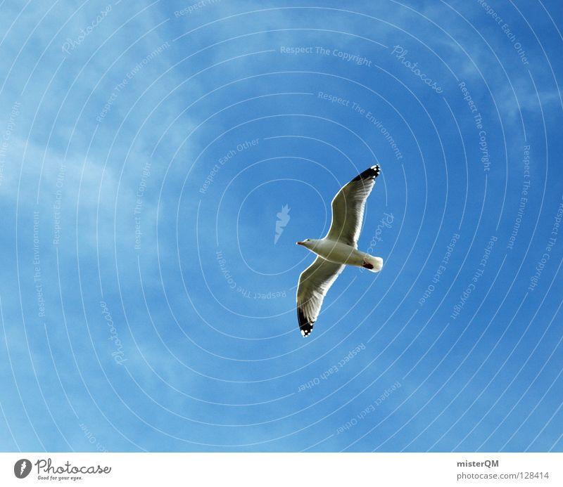 Wenn ich ein Vöglein wär... Möwe Vogel Meer Wolken Strand Ferien & Urlaub & Reisen Luft See Silbermöwe Sinnbild Kunst Ferne Himmel Schnabel Flügel Gewässer