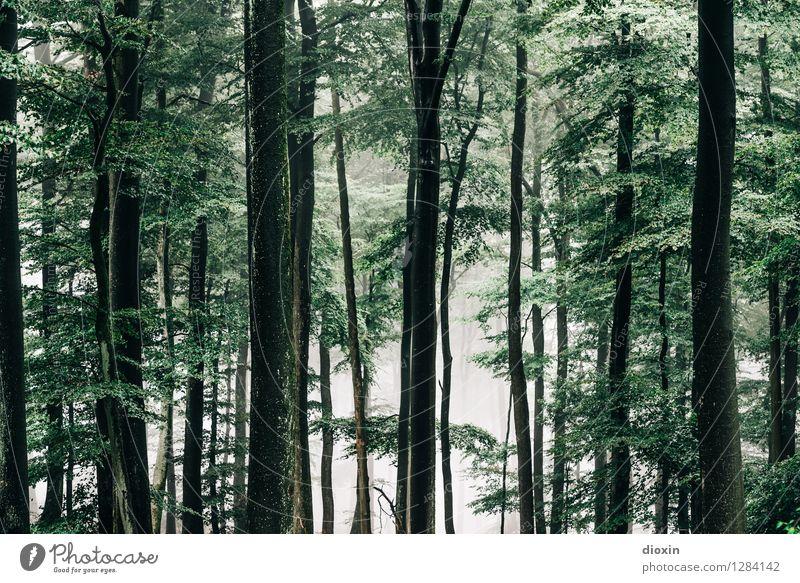 Nachdemregenwald [16] Ausflug wandern Umwelt Natur Landschaft Pflanze Herbst Klima Wetter schlechtes Wetter Nebel Regen Baum Wald Urwald Wachstum kalt nass