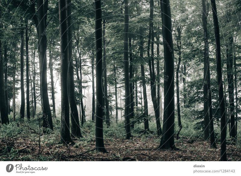 Nachdemregenwald [18] Umwelt Natur Landschaft Pflanze Herbst Wetter Nebel Baum Wildpflanze Wald Urwald Pfälzerwald Wachstum nass natürlich Farbfoto