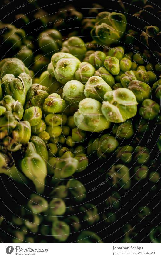 Der Brokkoli I grün Gesunde Ernährung Speise Essen Foodfotografie Gesundheit Lebensmittel ästhetisch nah Gemüse lecker Bioprodukte Vegetarische Ernährung Rätsel