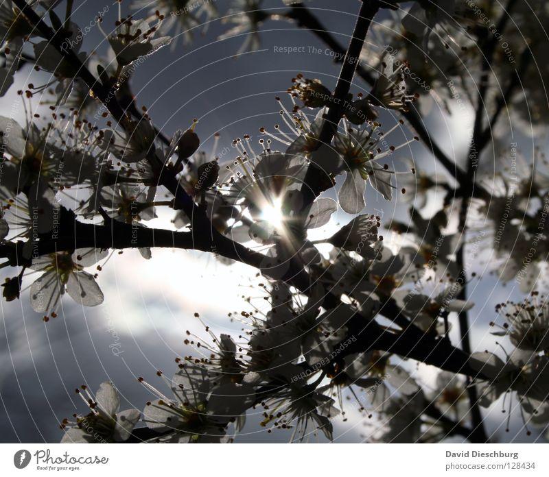 Light in the flowers Himmel Sommer Sonne Baum Blume Freude dunkel schwarz Wärme Beleuchtung Frühling Blüte hell Energiewirtschaft Frucht Wachstum
