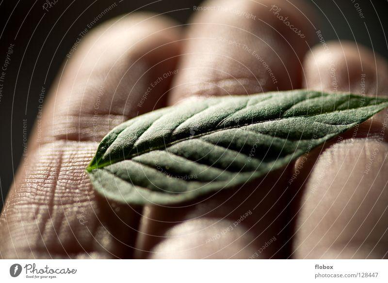 Schutzlos Bioprodukte Gesundheit Mensch Hand Finger Natur Pflanze Klima Klimawandel Blatt grün Umweltschutz Photosynthese ökologisch Pflanzenschutz Biologie
