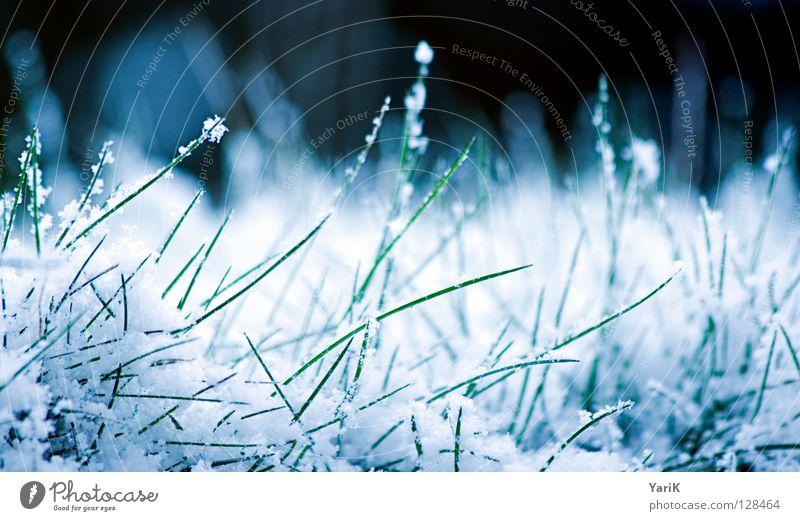 snow-white Winter Gras Wiese Halm grün weiß Makroaufnahme kalt Eiskristall Schneeflocke Rasen blau Kontrast Frost gefroren