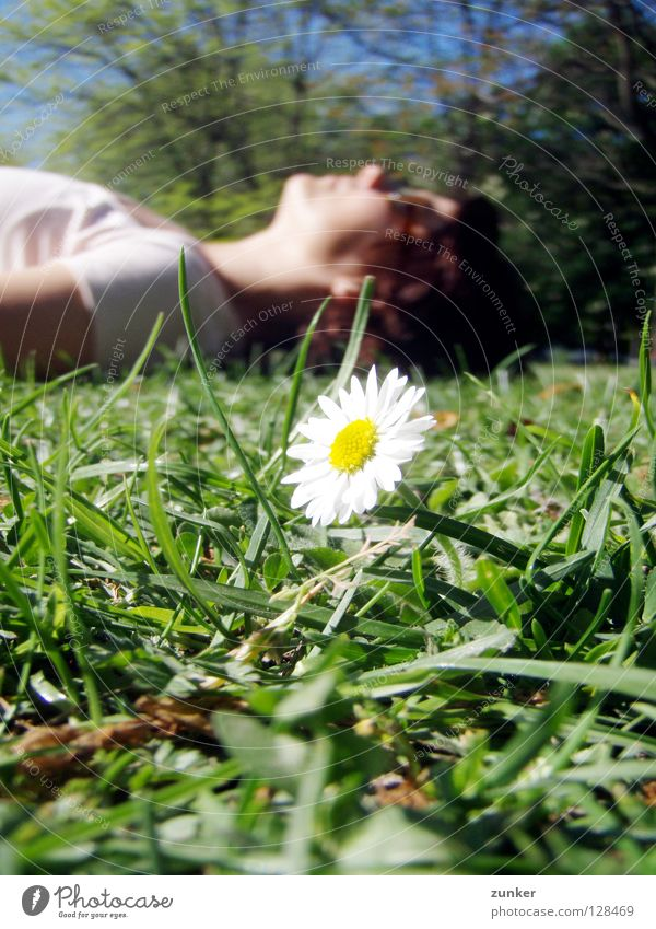 Summertime Gras grün Blume saftig Frau Pause Erholung Sommer ruhig Gänseblümchen Makroaufnahme Nahaufnahme Freiheit