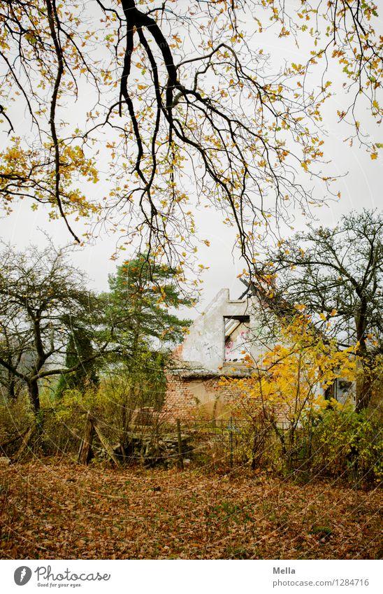 Schöner wohnen Haus Umwelt Landschaft Herbst Baum Ast Wald Hütte Ruine Gebäude alt gruselig hässlich kaputt trist Stimmung Sorge Senior Einsamkeit