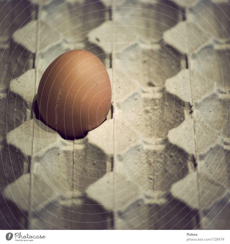 Ja mei, ist denn scho Ostern? Osterei springen Gemälde Haushuhn Eierschale Käfig Gehege ökologisch Umwelt Unkrautbekämpfung Eigelb Tier Nutztier Hühnerei