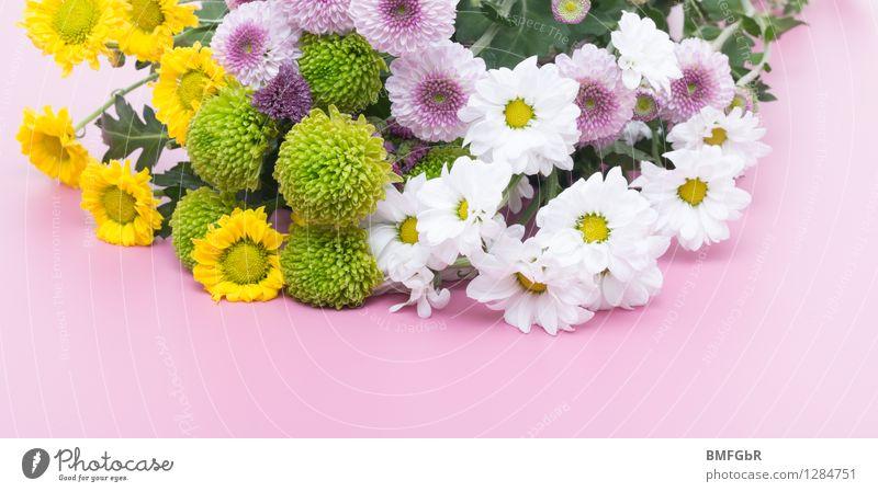 Blumige Bordüre Pflanze grün schön weiß Blume Freude gelb Leben Blüte natürlich Glück rosa Zufriedenheit frisch Dekoration & Verzierung authentisch