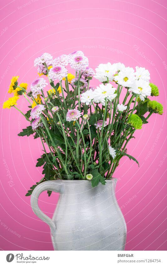 Eine Maß Blumen Pflanze grün weiß Blume Blatt gelb Liebe Blüte Glück rosa Wohnung Zufriedenheit frisch Dekoration & Verzierung Fröhlichkeit ästhetisch