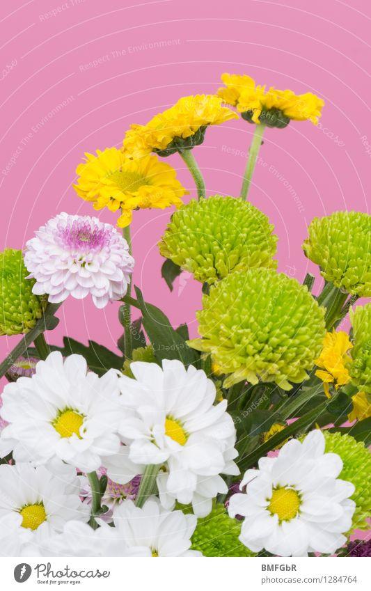 Flower Power Pflanze schön Farbe Blume gelb Frühling Blüte natürlich Glück rosa frisch Fröhlichkeit Lebensfreude Geschenk Freundlichkeit Blumenstrauß