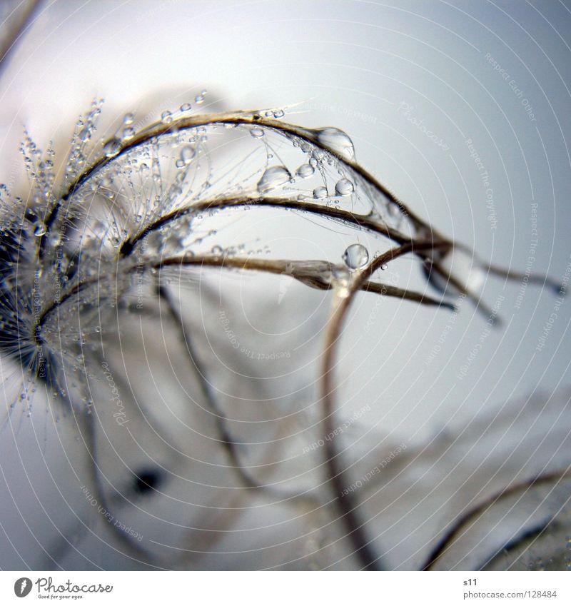 FlauschigNass II weich kuschlig fein zart leicht nass Spermien chaotisch verwickelt Glätte Wassertropfen Herbst Baum Wachstum Jahreszeiten kalt Winter