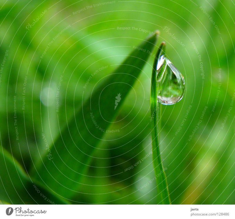 tropf..... Wasser grün Wiese Gras Regen Wassertropfen nass Seil