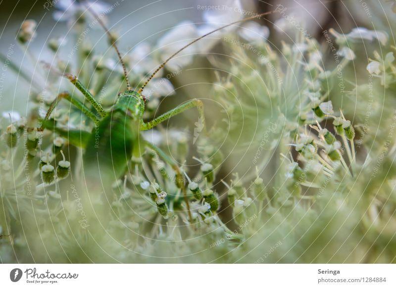 Gleich oben angekommen Natur Pflanze Blume Landschaft Tier Wald Umwelt Wiese Gras Garten springen Park Feld Sträucher krabbeln Heuschrecke